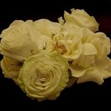 Flowers 12-9-12