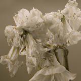 Flowers #8