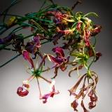 Flowers 6-8-13
